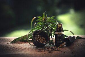 legalisation-du-cannabis-en-france-pour-bientot