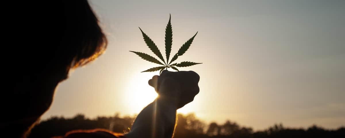 depenaliser cannabis france