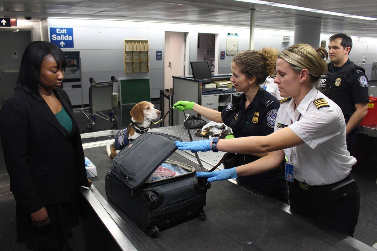 prendre avion avec du cbd douane